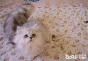a_猫薄荷对猫咪有何作用-成猫饲养[新闻]