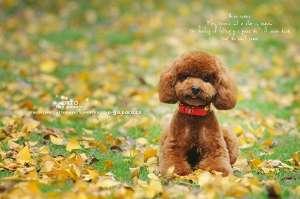 狗狗真菌性皮肤病的治疗和预防